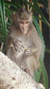 Monkey in Monkey Island